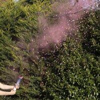 Ginger Ray Rook- en confettikanon Gender Reveal roze-commercieel beeld